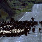 Sarıkeçililer - Yarınsızlığa Göç